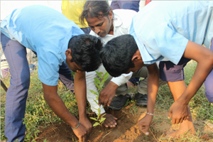 Planting Trees Save Trees Environment Protection