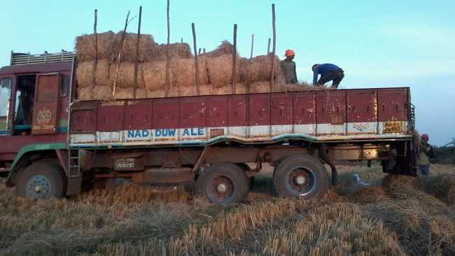 Truck Load of Grass Donated to JIVA Gosala Protection Of Cows