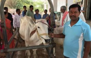 Veterinary Camps Cow Protections Villages