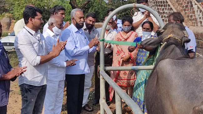 363 animals treated in veterinary camps Warangal